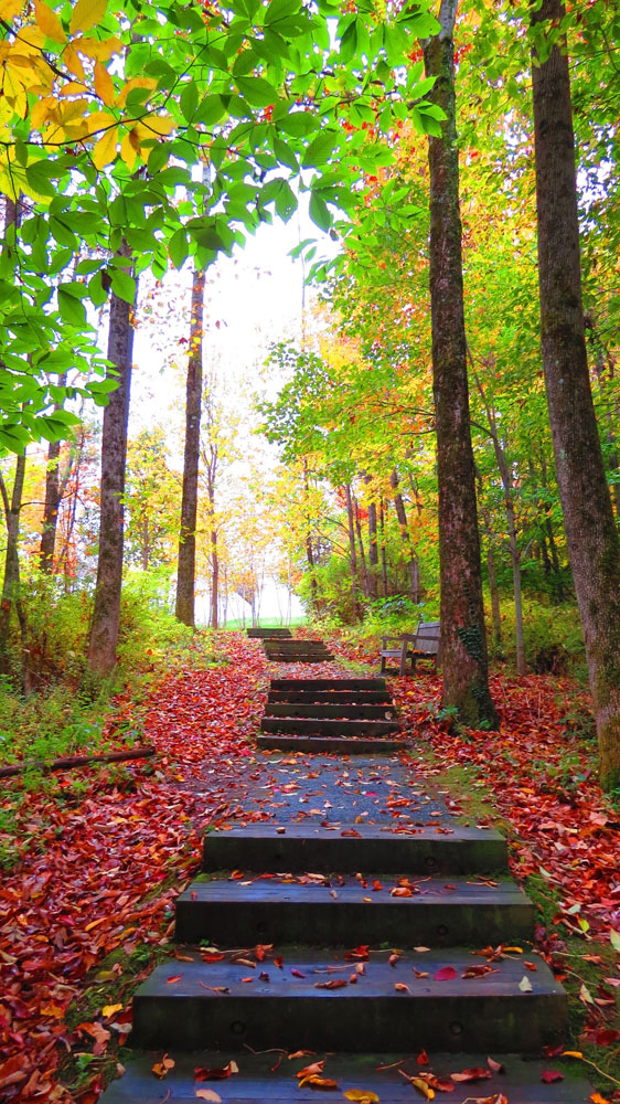a photo of autumn trees around a concrete path with steps by Marcyn Clements