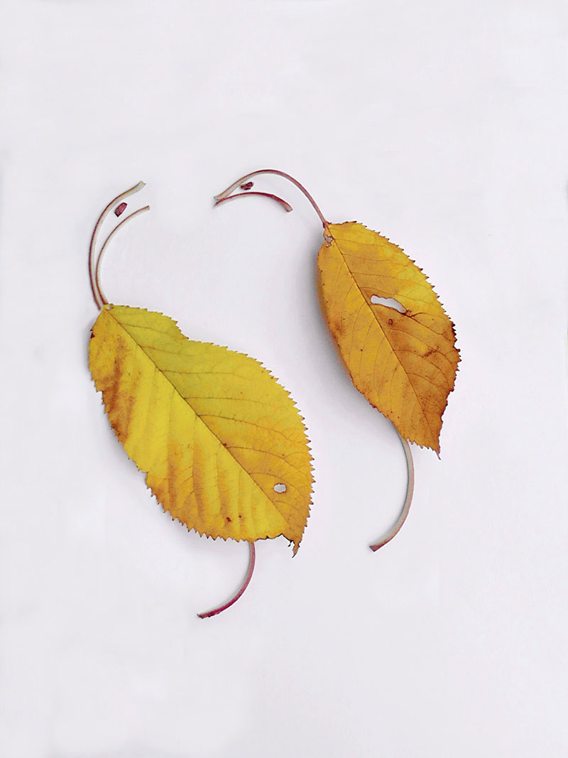 a photo of two leaves arranged to look like herons by Mohsen Farsani